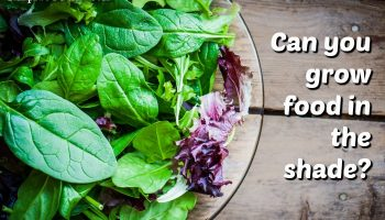 Food you can Grow in the Shade