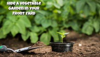 Hide a Vegetable Garden in your Front Yard