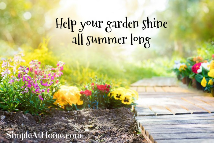How to Make your Garden Thrive in the Summer Heat