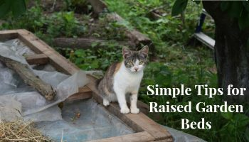 Simple Tips for Building and Maintaining a Raised Bed Garden