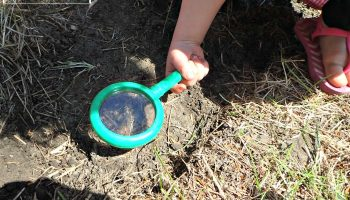 Teaching Kids about Soil