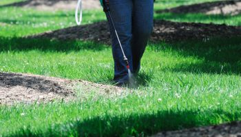 3 Common Lawn Care Myths That Need to Be Weeded Out
