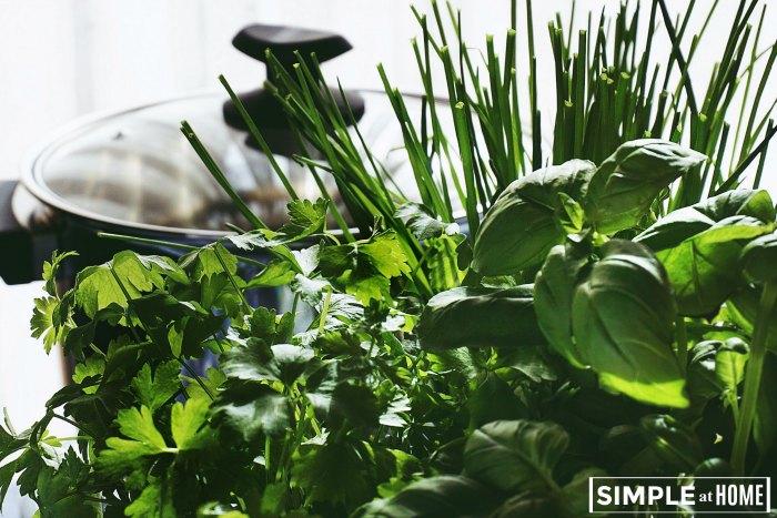 Tips For Growing An Indoor Herb Garden