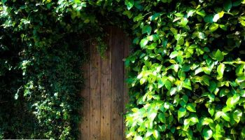 Best Security Tips to Keep my Garden Safe
