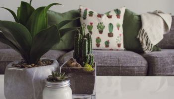3 Stylish Home Decor Trends To Try This Summer