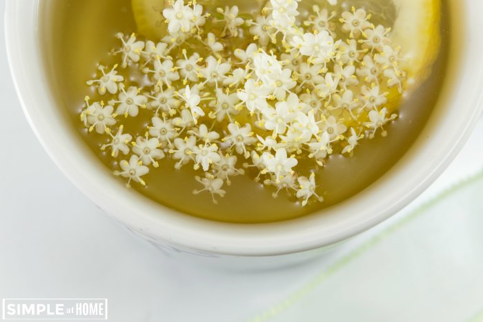 Elderflower Tea Benefits With Easy Elderflower Tea Recipe