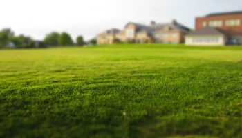 A New Homeowner's Guide to Lawn Care: 5 Top Tips