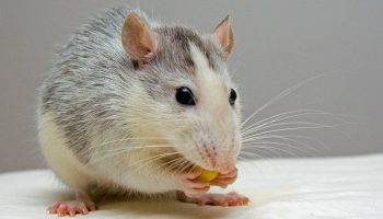 5 Ways To Get Rid Of Pests Naturally