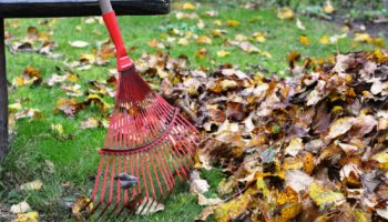 Is There A Wrong Way To Rake Leaves?