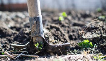 10 Easy Ways To Improve Soil