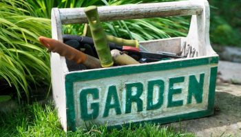 Simple Guide For Growing Your Own Victory Garden