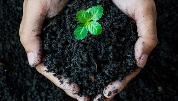 Free Ways To Improve Your Garden Soil