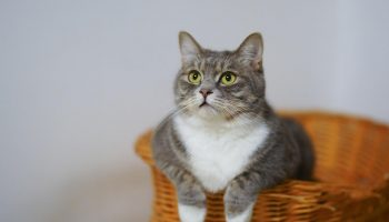 Keep Your Kitty Away from These Plants