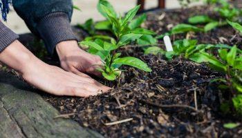 6 Gardening Tips for Beginners