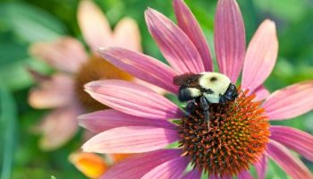 Bee Freindly Garden Tips For Home Owners