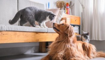 How to Create a Pet-Friendly Home?