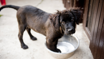 How to Prepare Your Home Ready for a New Puppy This Summer